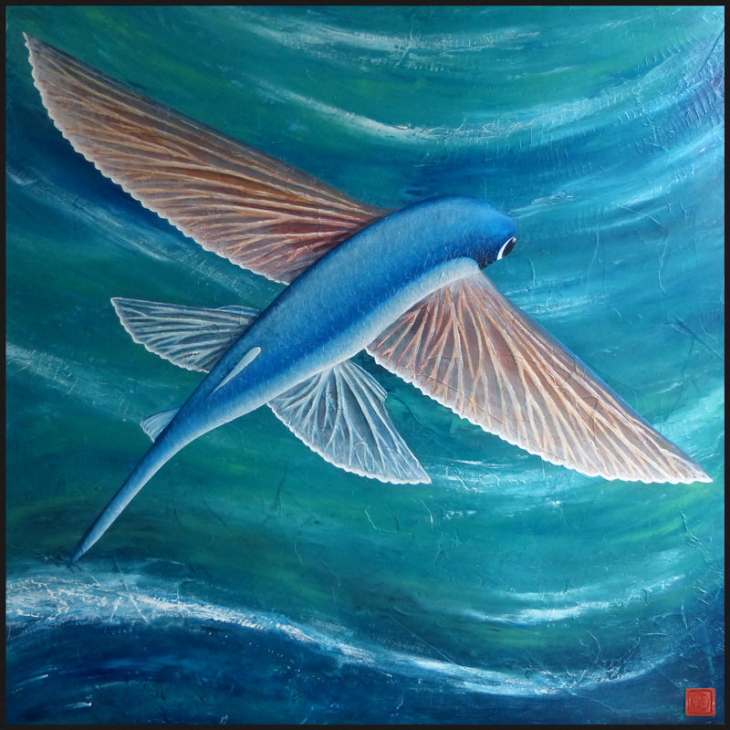 pez-volador-x-800 copia